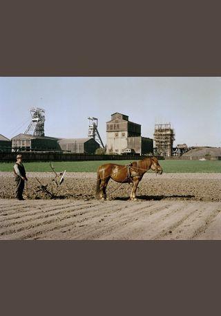 """Josef Stoffels, """"Landwirtschaft"""", Ruhrgebiet, um 1957 /  © Fotoarchiv Ruhr Museum"""