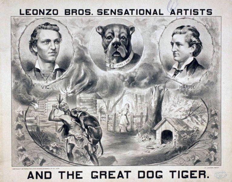 """Tiere im """"Zivilisierungsprozess"""". Die Inbesitznahme  des amerikanischen Kontinents durch die Europäer wurde auch mithilfe von Tieren durchgesetzt. Einige von ihnen erlangten besondere Bekanntheit, die entsprechend vermarktet wurde. Leonzo Bros. Sensational Artists and the Great Dog Tiger, 1879. Quelle: [http://www.loc.gov/pictures/item/2014635896/ Library of Congress Prints and Photographs Division] ([http://en.wikipedia.org/wiki/Public_domain Public Domain])."""