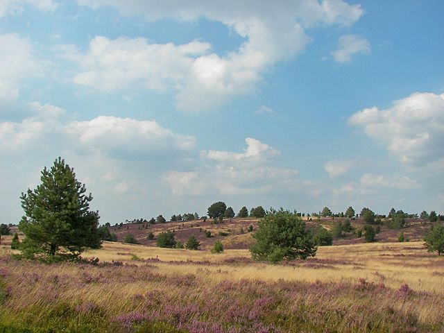 "Die ""unberührte Natur"" ist ein menschliches Konstrukt: Lüneburger Heide – Naturschutz als Kulturlandschaftsschutz. Blick auf den Wilseder Berg, Foto: Willo, 13. August 2007, Quelle: [https://commons.wikimedia.org/wiki/Category:L%C3%BCneburger_Heide?uselang=de#/media/File:L%C3%BCneburger_Heide_113.jpg Wikimedia Commons] ([http://creativecommons.org/licenses/by/2.5/ CC BY 2.5])"