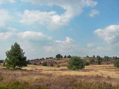 """Unspoiled nature"" is a human construct: Lüneburg Heath – the conservation of nature as the conservation of cultural landscapes. View of Wilsede Hill, photo: Willo, August 13, 2007, source:: [https://commons.wikimedia.org/wiki/Category:L%C3%BCneburger_Heide?uselang=de#/media/File:L%C3%BCneburger_Heide_113.jpg Wikimedia Commons] ([http://creativecommons.org/licenses/by/2.5/ CC BY 2.5])"